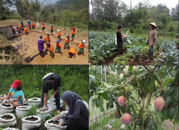 Edukasi pertanian