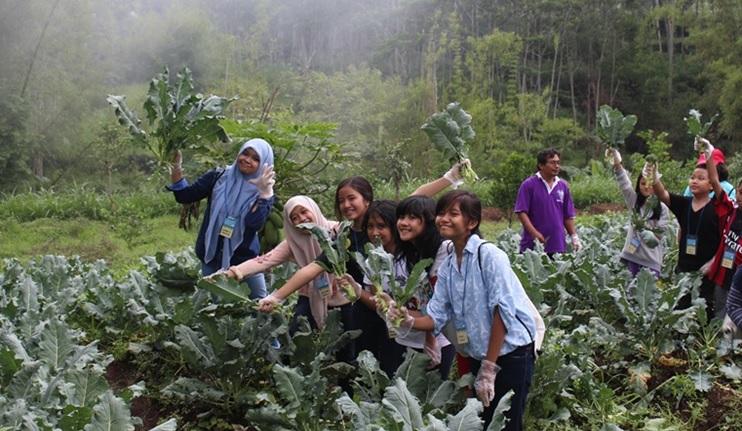 Edukasi pertanian dan tanaman buah